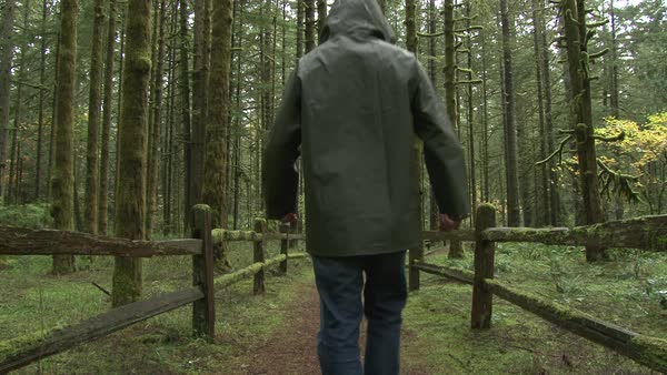 Model released man in rain gear walking away on hiking trail in the Pacific Northwest forest on rainy day. Royalty-free stock video
