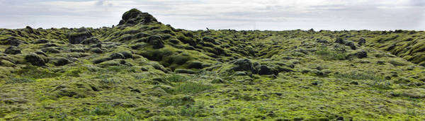 Panoramic view of moss-covered lava field, Iceland Royalty-free stock photo