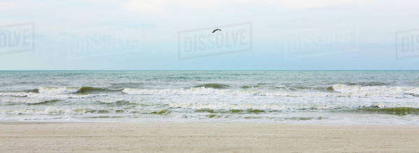 Gull flying over beach Royalty-free stock photo