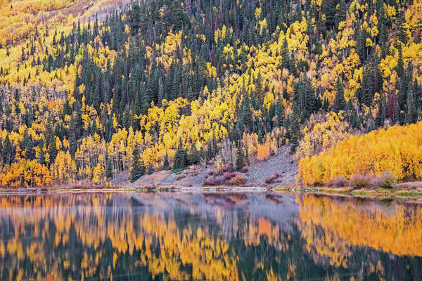 Reflection of yellow autumn trees on hillside in tranquil lake, Crystal Lake, Ouray, Colorado, United States Royalty-free stock photo