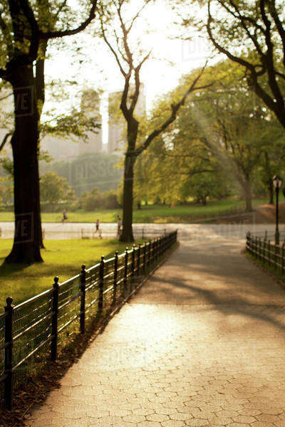 Trees growing in urban park Royalty-free stock photo