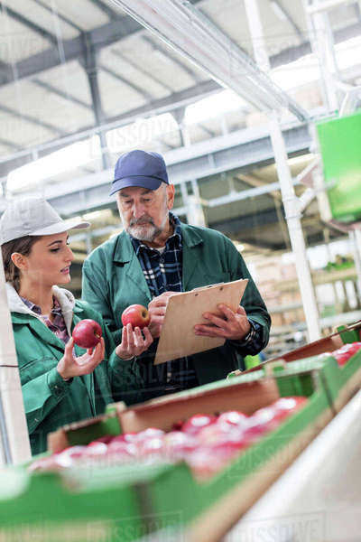 Manager with clipboard and worker examining red apples in food processing plant Royalty-free stock photo