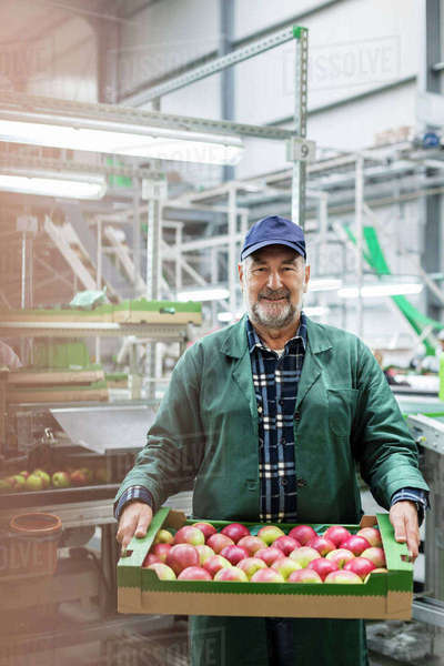 Portrait smiling worker carrying box of apples in food processing plant Royalty-free stock photo