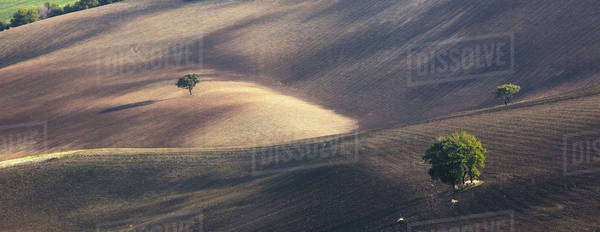 Trees growing in dry rural landscape Royalty-free stock photo