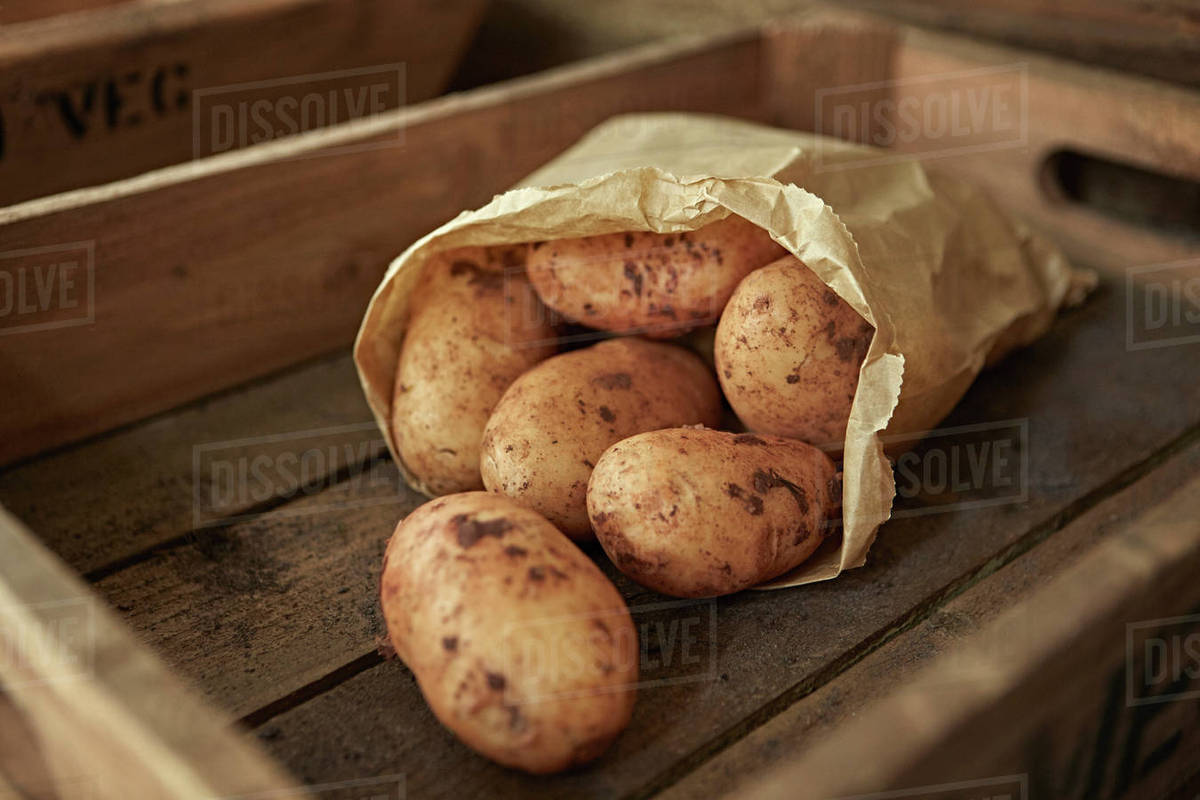 still life close up rustic fresh, organic, healthy dirty potatoes