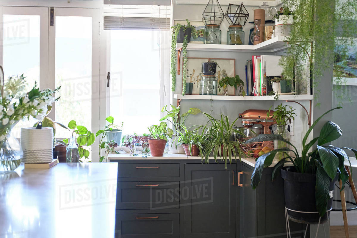 Houseplants in domestic kitchen Royalty-free stock photo