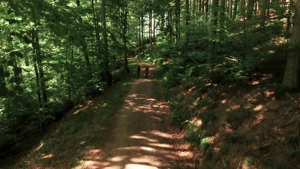 Wide shot of two bikers approaching on forest path Royalty-free stock video