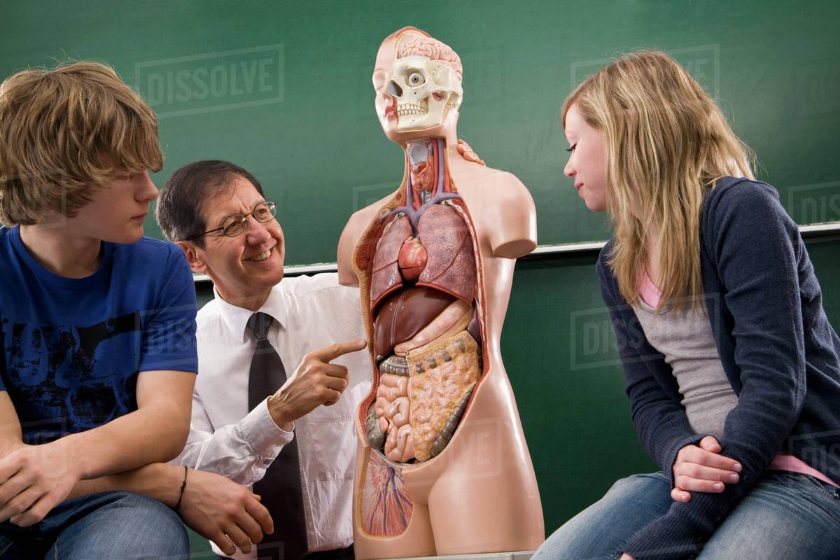 A Biology Teacher Teaching Students Anatomy Stock Photo Dissolve