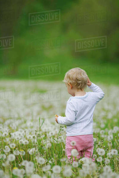 Rear view of toddler standing amidst dandelions in field Royalty-free stock photo