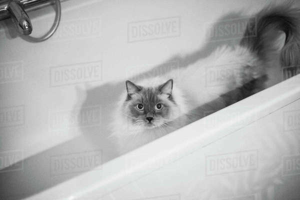 High angle portrait of cat in bathtub Royalty-free stock photo