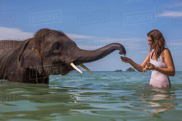 Mid adult woman feeding elephant in water Royalty-free stock photo