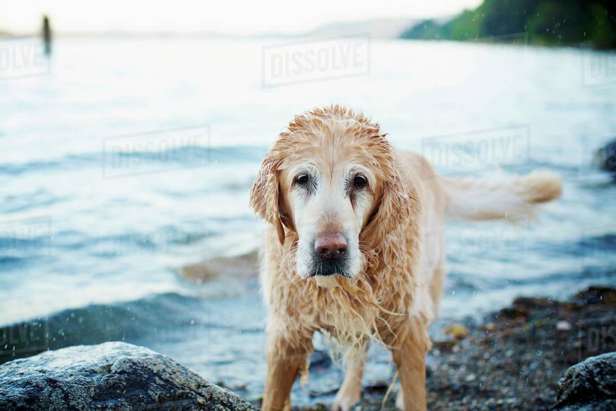 Portrait wet dog on beach Royalty-free stock photo