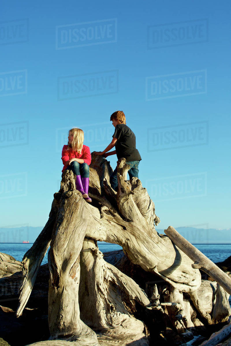 Brother and sister playing on driftwood at beach Royalty-free stock photo