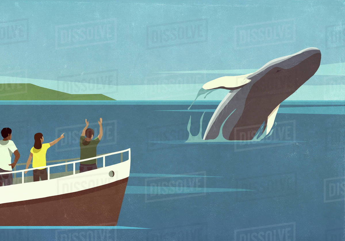 Tourists on boat watching breaching whale in ocean Royalty-free stock photo