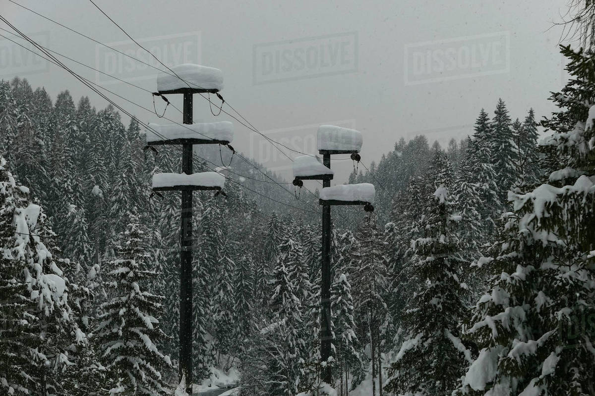 Snow covered trees and electricity poles in forest, Scuol, Canton of Grisons, Switzerland Royalty-free stock photo